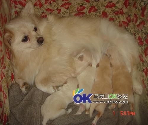 出售小狗啦 刚出生的哦,超可爱的 宠物交易中心