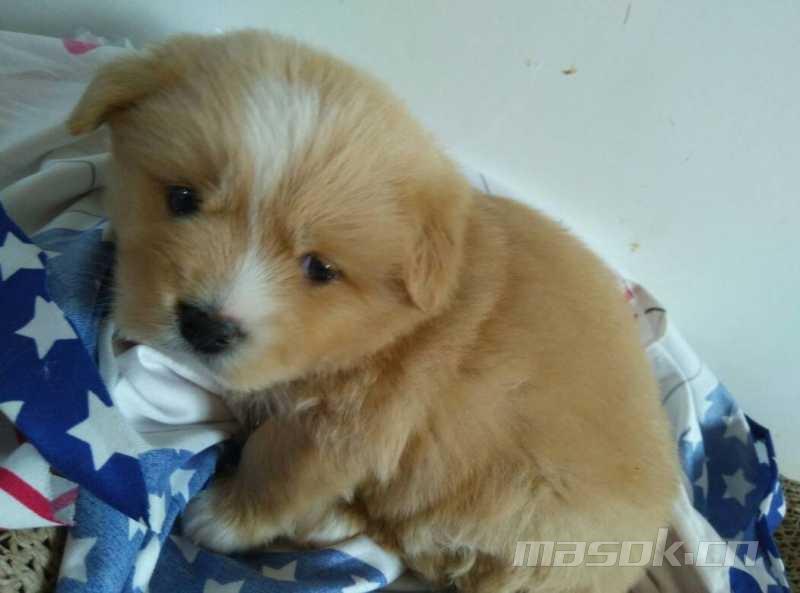 可爱小狗狗一只 - 领养救助中心